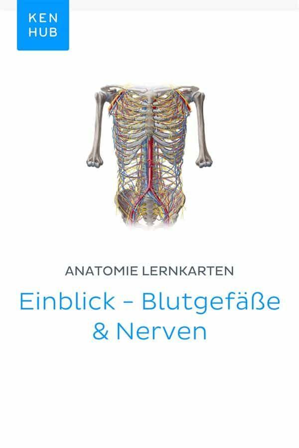 Gemütlich Anatomie Der Blutgefäße Labor Ideen - Anatomie Ideen ...